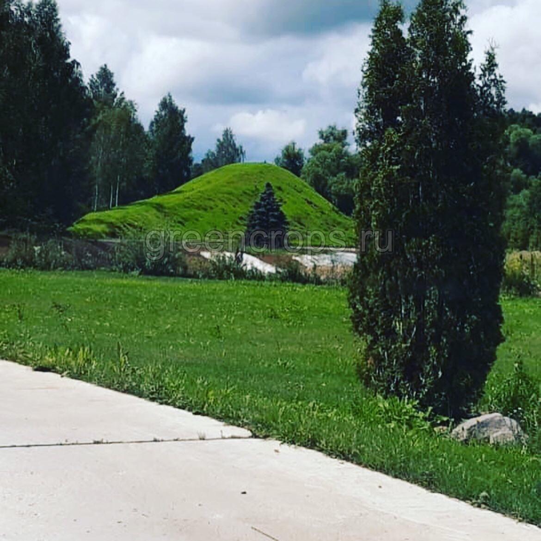 Результат гидропосева газона